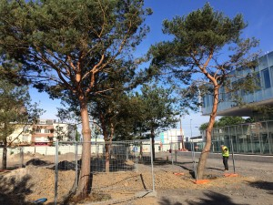 Arrosage automatique - Lille